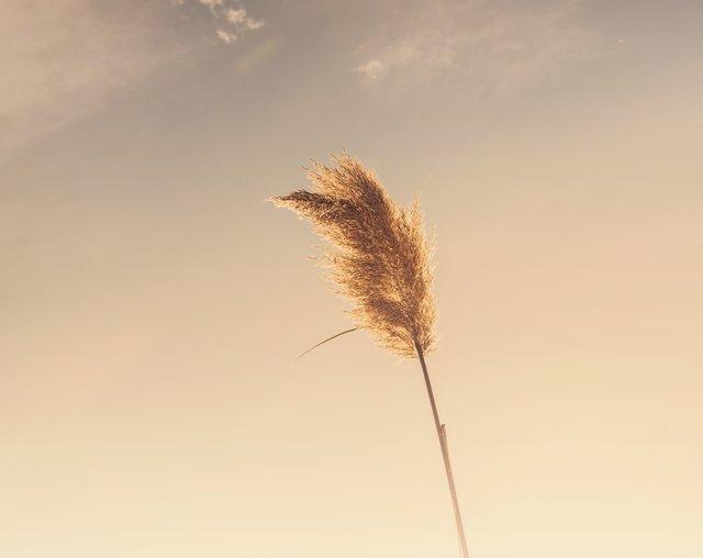 mindfulness oddechu