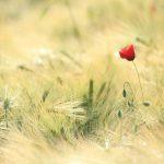 Mindfulness, medytacja, odosobnienie